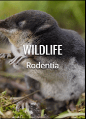 wildlife rodent exterminator in DC