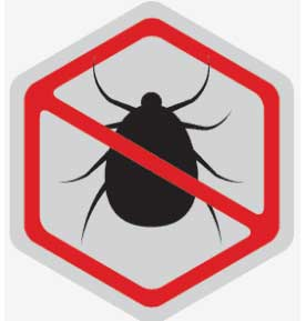 silver spring bed bugs